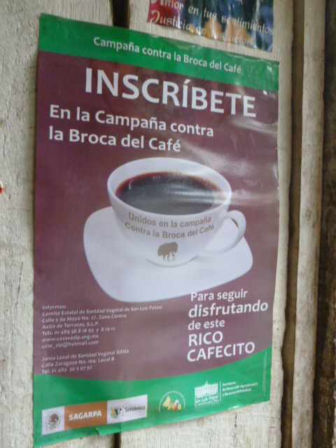 A poster on the wall of Dolores' home warns coffee growers of a new pest to guard against