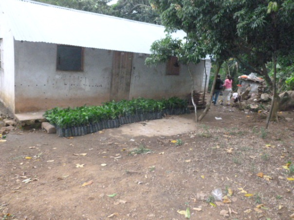 A new strain of disease resistant coffee plants supplied by the State line the front of this house