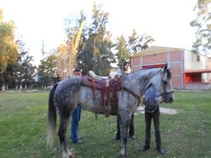 Paloma ready to take Juan Jose's work buddies for a ride.