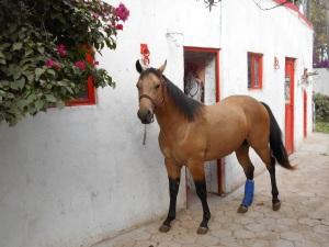 Newest addition to the horses at Caballo Bayo