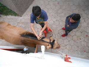 Reberto and Anahi braiding the mane.